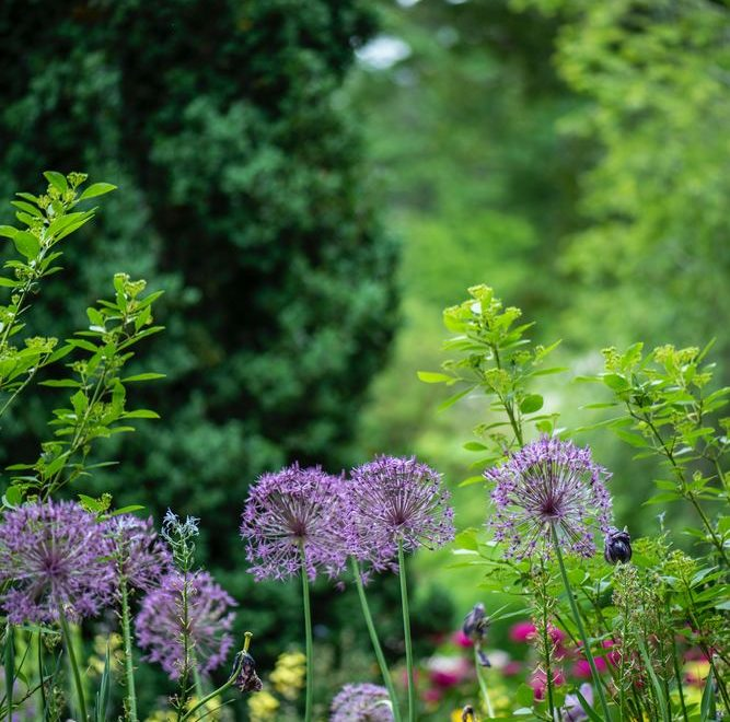 Fixa trädgården som ett proffs