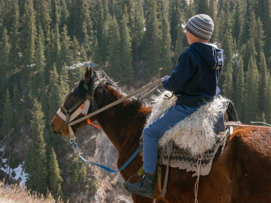 Hästarnas välmående på ridskolor